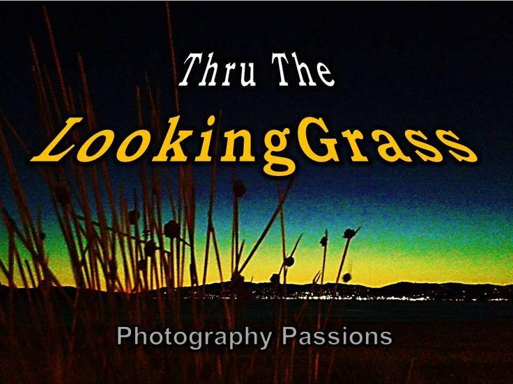ORANGE OCEAN SUNSET: THROUGH THE LOOKING GRASS -'3.17 Minutes Ambient Mu...