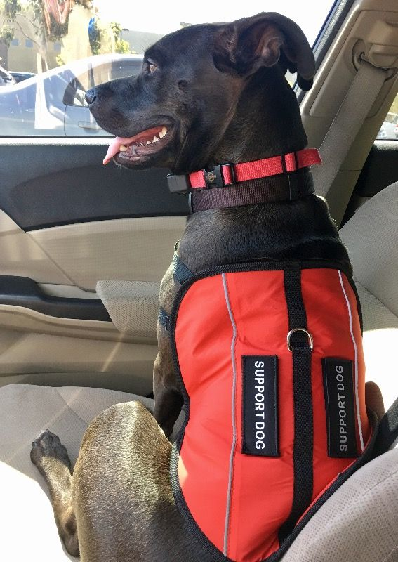 Register your Service Dog and Emotional Support Animal free, Emotional Support Animal letters, service dog vests, service dog id cards and gear.