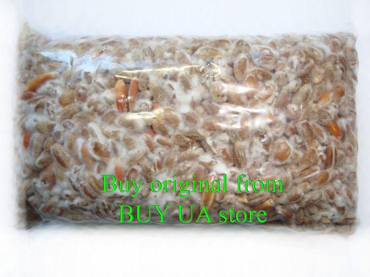 100g live mycelium seeds spores grow morels