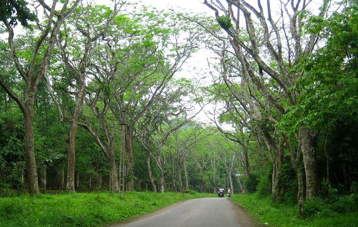 National natural garden Cúc Phương