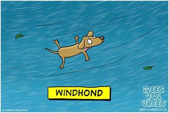 'n Opregte windhond... #grappe #hond #snaaks #humor #lol #snaaks