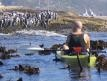 Penguin Sea Kayak in Cape Town