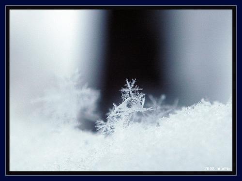 snowflakeSnowflakes Photographers, Simply Snowflakes, Snow Details, Fabulous Photos, Inspiration Things, Simply Photography, Snow Flakes, Snowflakes Photography, Photography Inspiration