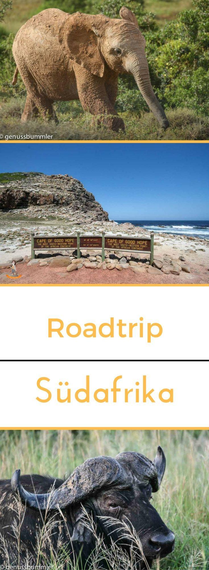 Roadtrip 8: Stadt, Safari und Natur in Südafrika