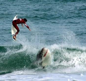 Surfing with sharks. I just try not to think about it.