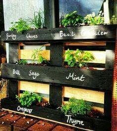 Herb garden using pallet