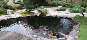 Garden Koi Pond Design