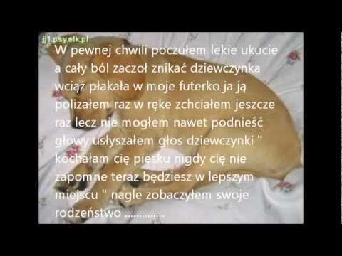 smutny film o psie