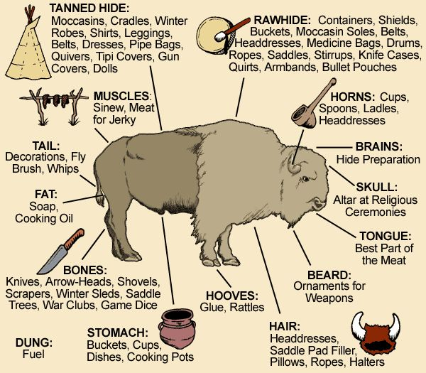 Plains Indians Killing Buffalo | make sure to print out a copy of this realize
