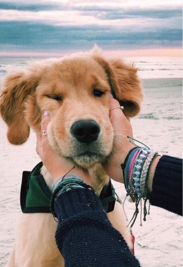 Vsco Teenagemoodss Cute Animals Puppies Animals