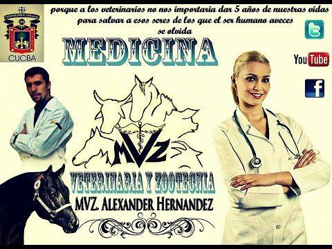 ALEXANDER HERNANDEZ - TEMA: GENERALIZACION DE COCCIDEAS Y TREMATODOS (Parasitologia V.) - YouTube