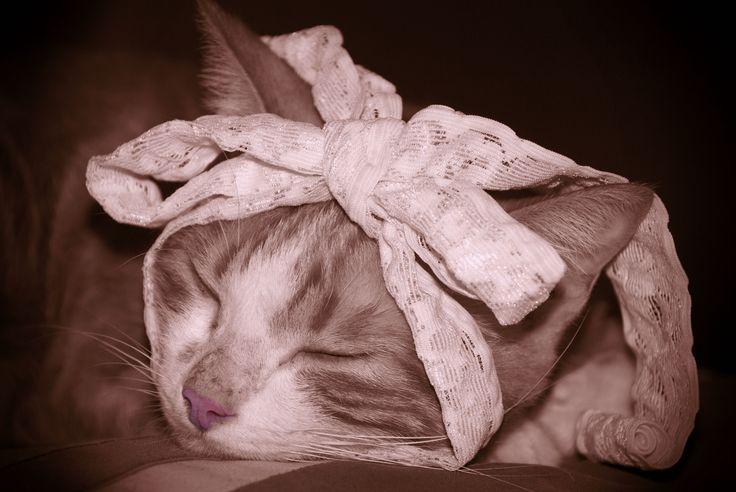 Protrait Of Cat