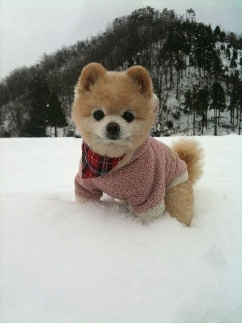 Can I play in the snow with you?