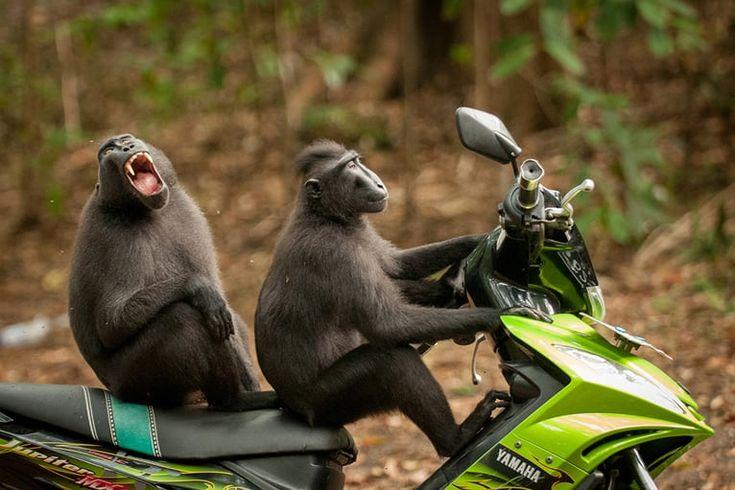Årets roligaste djur har korats – se bilderna här | Metro
