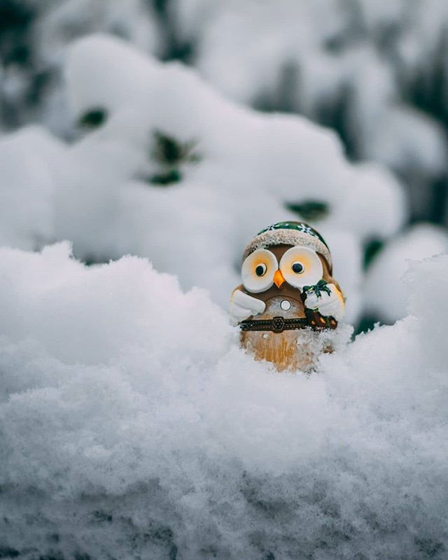 Owl Life . . .  #photooftheday #smile #picoftheday #pictureoftheday #photography #photo #photos #picture #winter #season #cold #snow #ice #snowflakes #nature #beauty #pretty #landscape #cute #animal #owl #chillin #art #composition #picture #artsy