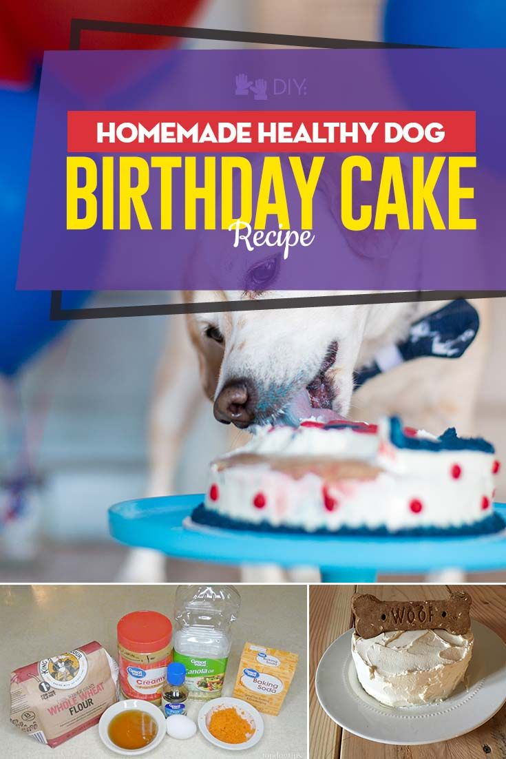 Healthy Dog Birthday Cake Recipe (easy and simple to make ...