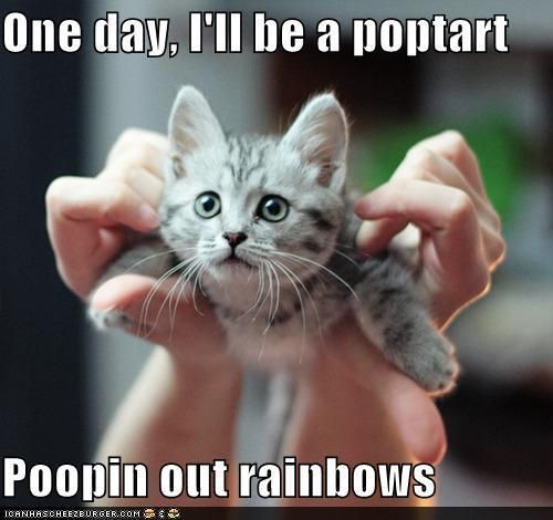 ``One day, I`ll be a poptart                                                                Poopin out rainbows``