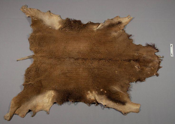 Бизонья накидка, Лакота. Вид два. Victor J.Evans, 1931 год.  Размеры: 160 х 142 см. NMNH.