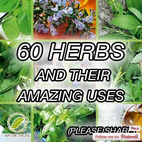 60 Herbs And Their Amazing Uses | http://homestead-and-survival.com/60-herbs-and-their-amazing-uses/