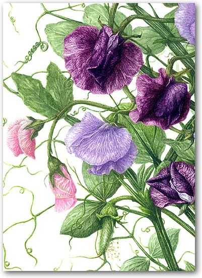 Heather Raeburn Botanical Print