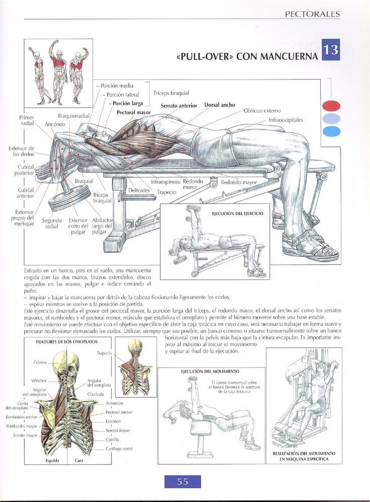 El pecho es una de las zonas que se buscan ejercitar, tanto por los hombres como por las mujeres. En caso de éstas últimas, buscan tonificarlo a través de ejercicios sin peso para pecho, sin realizar muchas repeticiones o esfuerzo por miedo a desarrollar excesiva masa muscular. En el caso de los hombres, la estrategia […]
