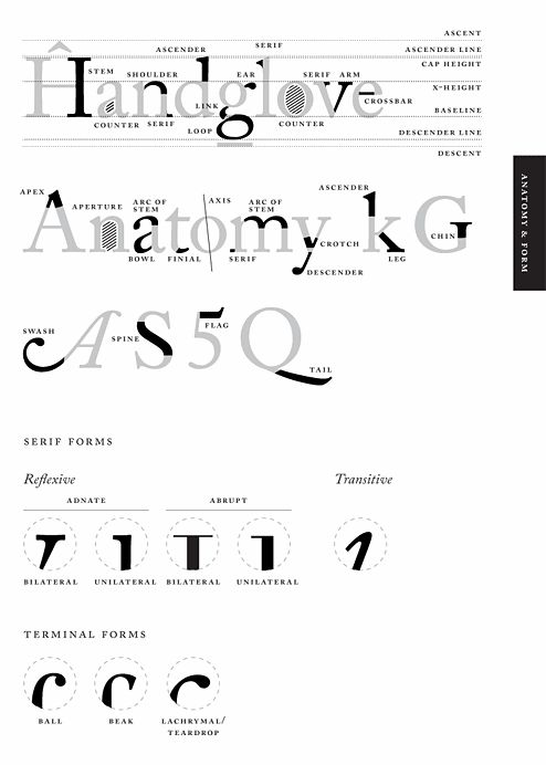 42 Best Anatomy Of Typography Fonts Images On Pinterest Typography