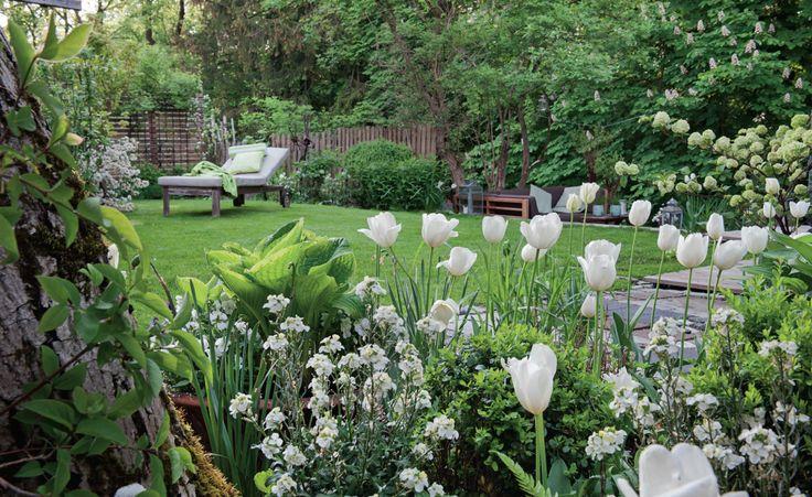 Leichtigkeit zieht in den Garten ein und das Grundstück bekommt optisch mehr Weite, wenn vor allem Blütenpflanzen mit hellen Farbtönen dort gedeihen. Im Frühling erfreuen Tulpen undSchöterich in strahlendem Weiß