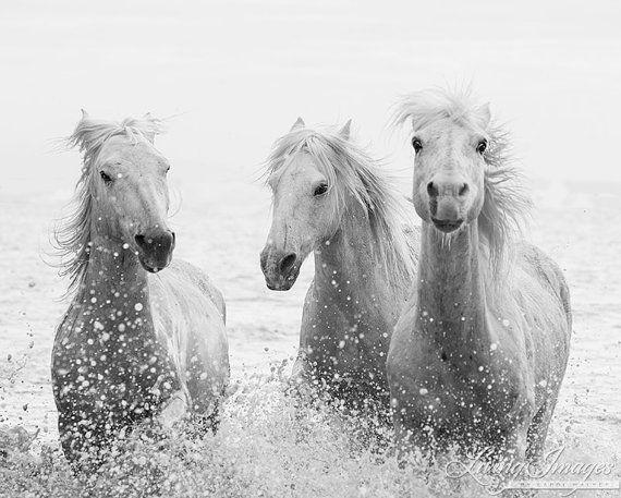 Les 25 meilleures id es de la cat gorie cheval noir et blanc sur pinterest chevaux noirs - Cheval a imprimer noir et blanc ...