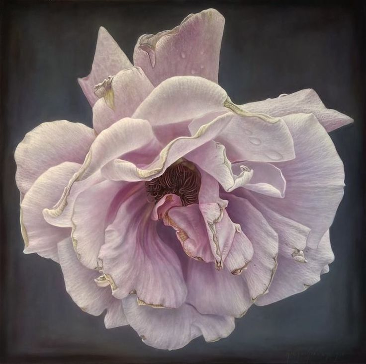 Delicate-hyper-realistic-paintings-of-roses-by-Gioacchino-Passini-02.jpg (740×737)