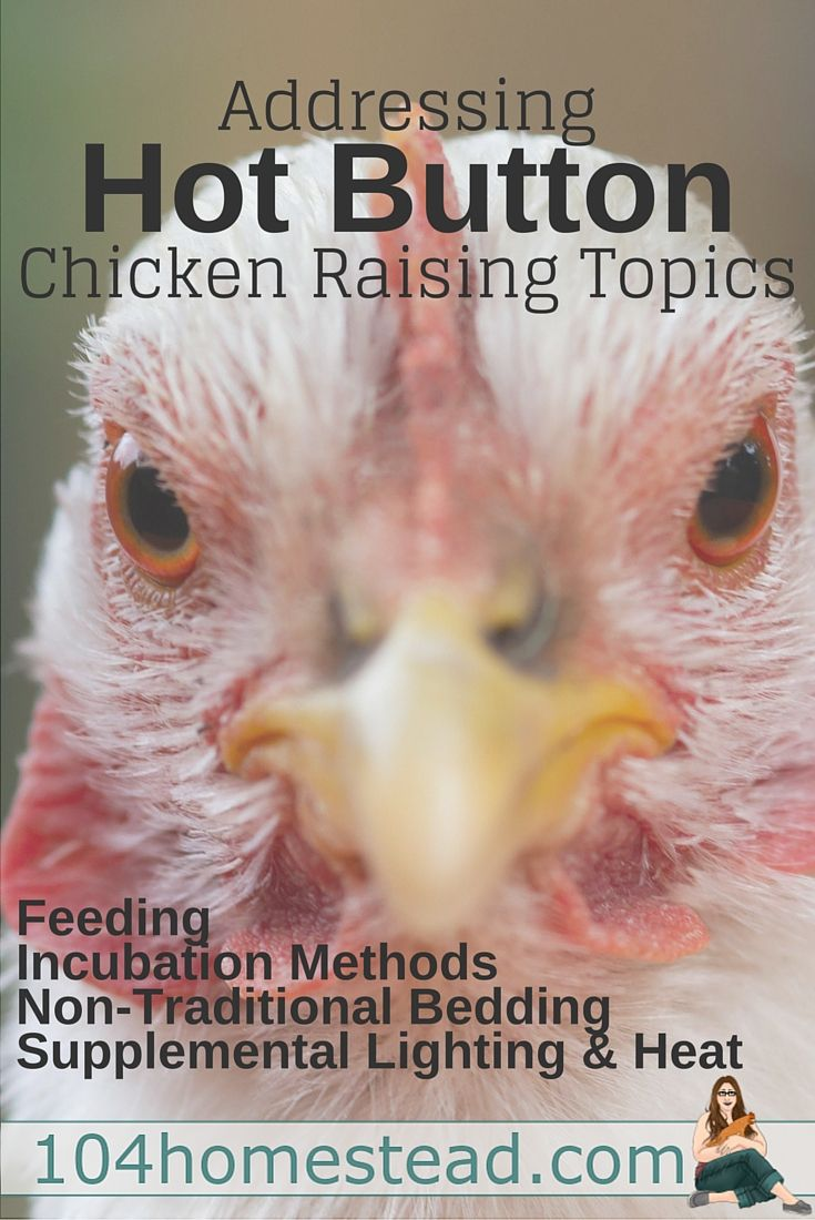 91 best chickens and their care images on pinterest raising