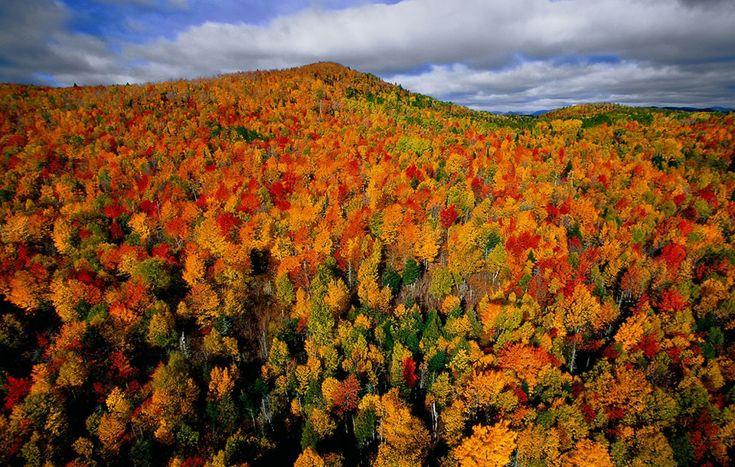 nunavut boreal forest