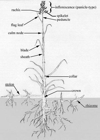 Diagram Of Grass Agriscience Fall 2012 Homeschool