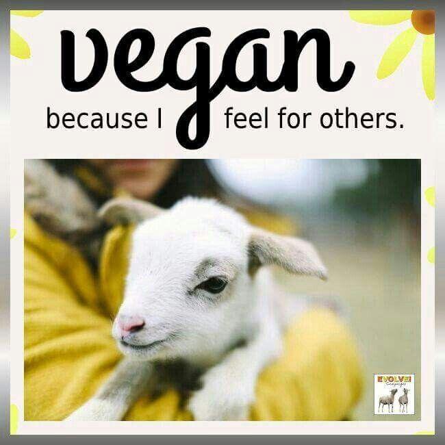 Pinterest Animal Quotes: 17 Best Animal Cruelty Quotes On Pinterest