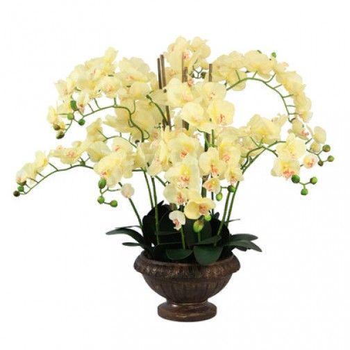 Arranjo de orquideas champagne