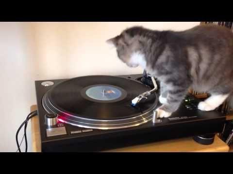 猫 & レコードプレーヤー 0006