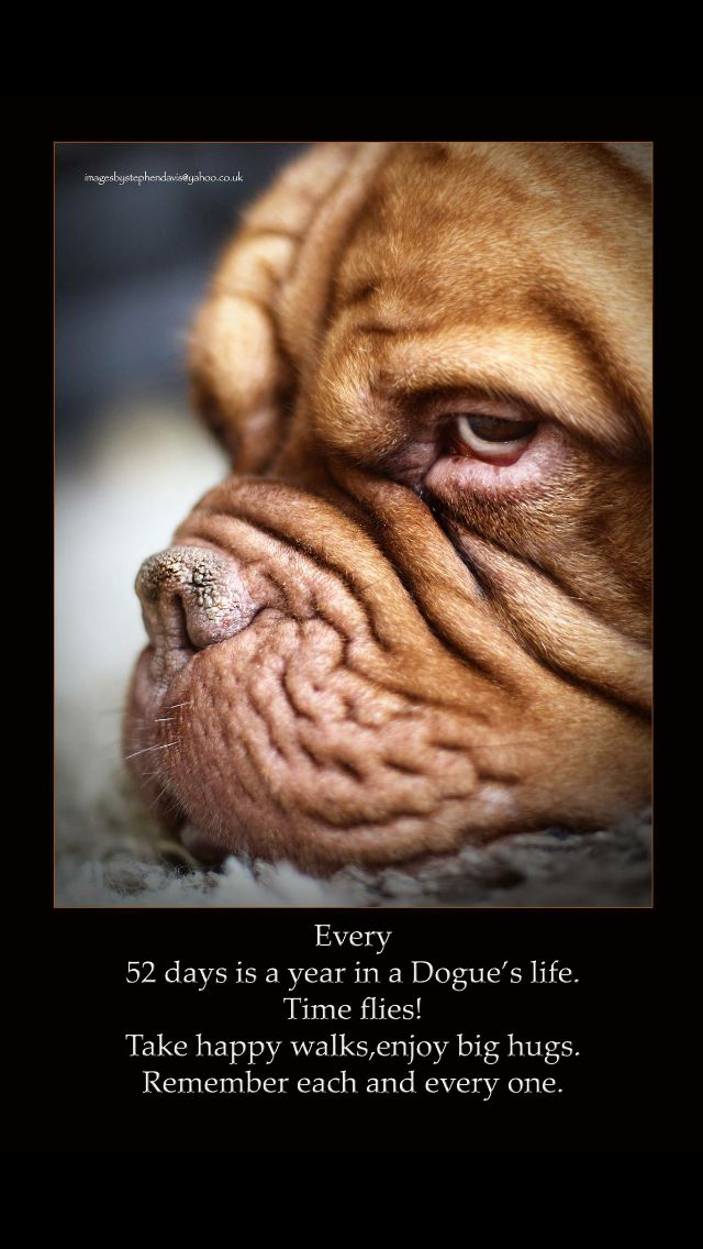 dogue years bordeaux