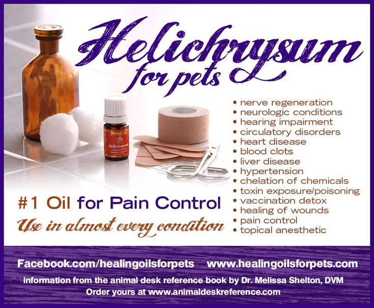Young Living Helichrysum Essential Oil for Pets too.  Contact me for more information, Young Living Distributor #1492804.