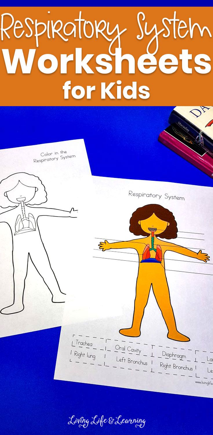 Respiratory System Worksheets For Kids Worksheets For Kids Science Activities For Kids Human Body Lesson