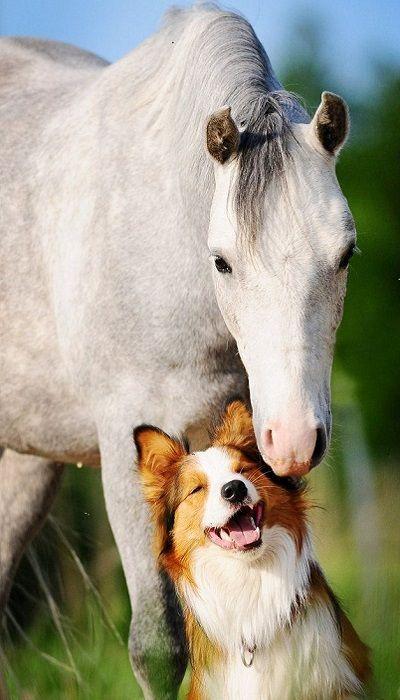 Les meilleurs amis sont ceux qui nous font voir la vie en riant...