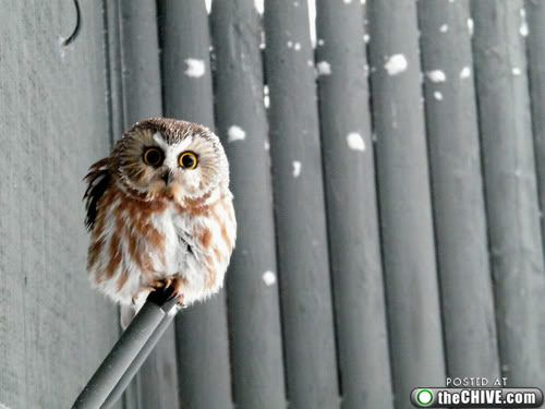 All the cutest baby owl pictures.