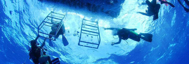 Diving, Ishigaki, Okinawa, Japan, Prime Scuba Ishigaki