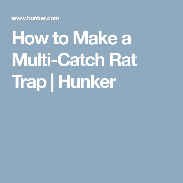 How to Make a Multi-Catch Rat Trap | Hunker