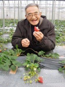 """日本の農薬の使用基準の緩さだ。ヨーロッパで使用禁止の農薬が日本では野放し状態。例えば、トマト、キュウリ、ナス、タマネギなどの多くの野菜に使われる殺菌剤「プロミシドン」は収穫前日まで散布可能だ。WHO(世界保健機関)の報告書で胎児への悪影響の恐れが指摘されている。健康被害を引き起こす恐れのある硝酸態チッソの基準値もないのだフランス最高裁で「ミツバチ大量死の原因」として販売禁止の判決を受けたネオニコチノイド系殺虫剤も日本ではリスクが""""完全には""""証明されていないとして使われ続けている。"""