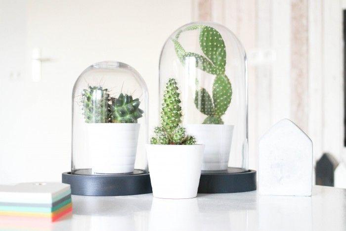 17 beste afbeeldingen over vaas pot stolp op pinterest plantenhangers huisarts en cactus - Huisarts klok ...