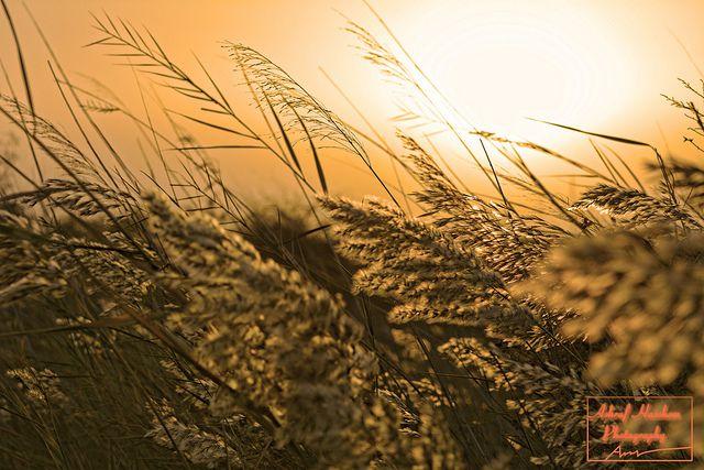 Sunset Winds & Baraem hope