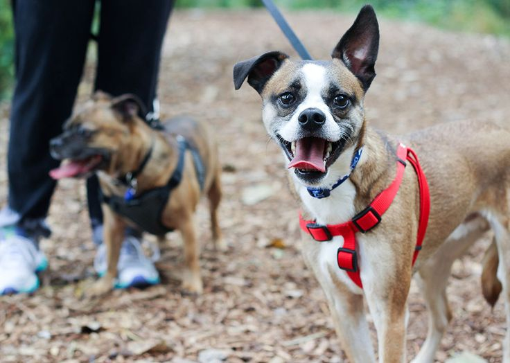 Reasons to Choose Pet Adoption Online Sites via @jennifersoltys