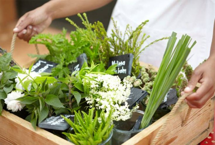 Franschhoek gears up to host the prestigious Délice Network of Good Food Cities
