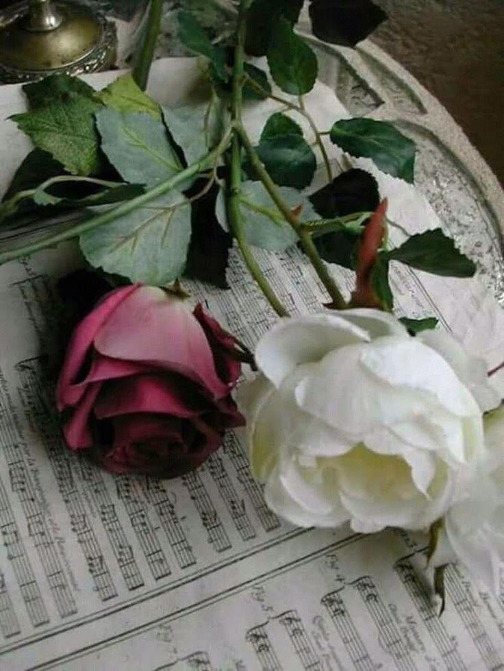 нежно-зеленой картинки грустных розы идеале кот должен