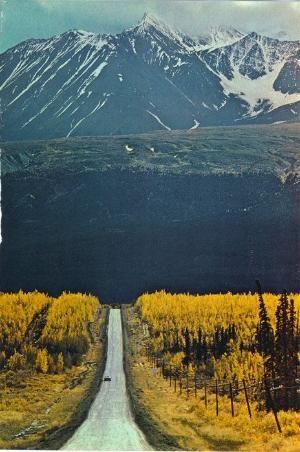 Montana by TamidP