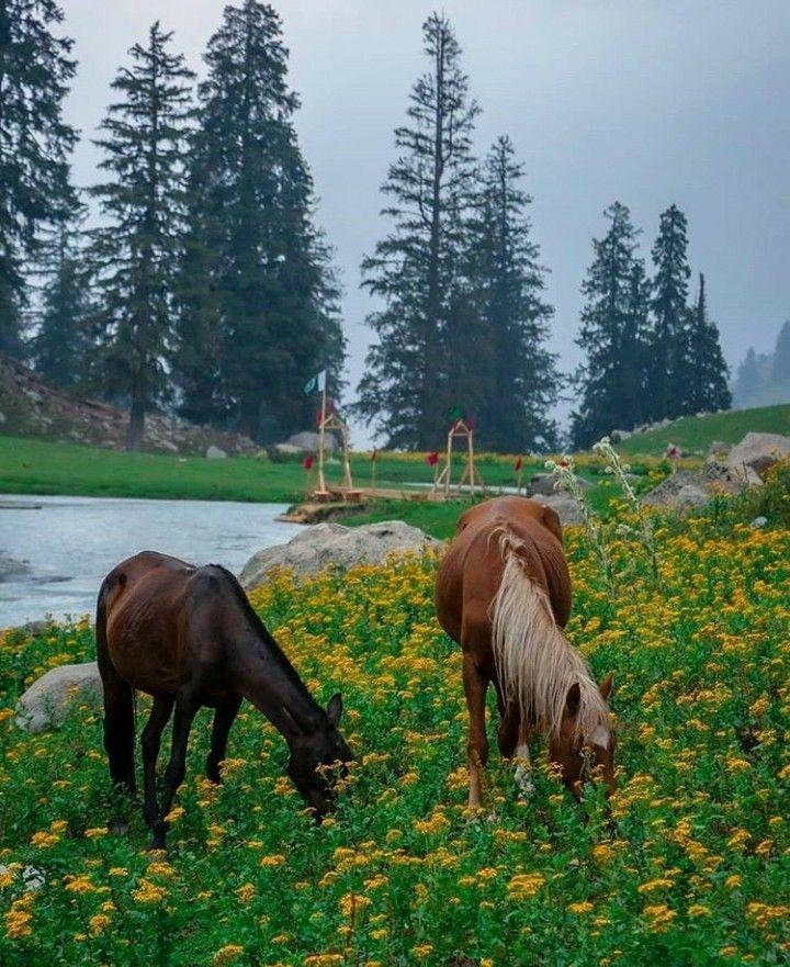Awesome Kumraat Valley Kpk Picnic Spot Paradise On Earth Khyber Pakhtunkhwa